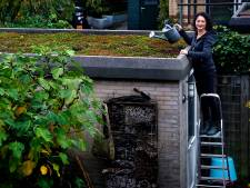 Iris heeft het kleinste gesubsidieerde groene dak van Gorinchem en zo legde ze het aan