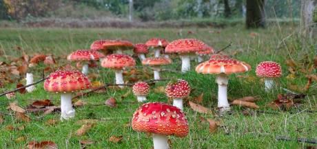 Compleet paddenstoelendorp aangetroffen in Oldenzaal: 'Uniek'