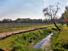 Realisatie wijndomein Sint-Catharinadal bijna klaar: nu wachten op de eerste oogst