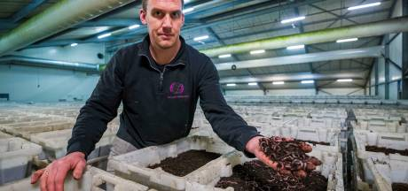 Wormenkwekerij Almkerk wil ondergronds: 'boven de 24 graden gaan de dieren dood'