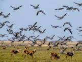 Faunabescherming naar rechter om afschot edelherten te voorkomen