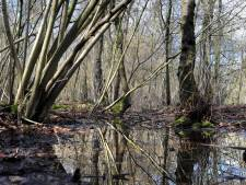 Ulvenhoutse Bos niet langer beschermd? Weinig kans