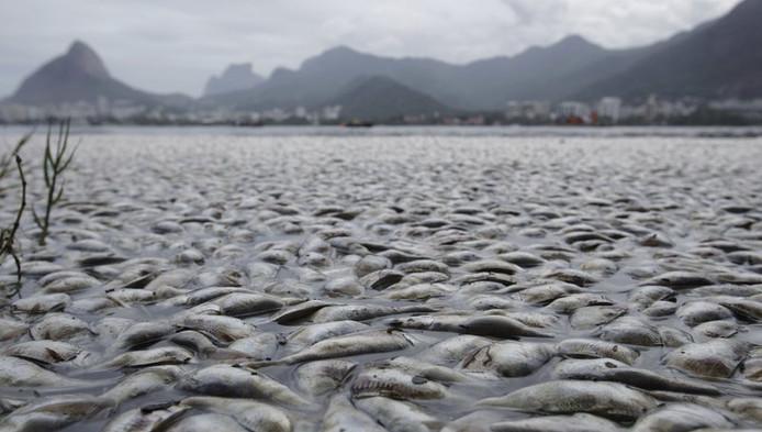 Quatre jours après l'apparition de ces tonnes de poissons morts flottant à la surface du lac, les causes en sont encore inconnues. Un rapport d'experts devrait être diffusé mardi.