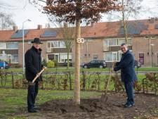 'De Oude Kerkhof' krijgt bijzondere boom terug