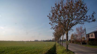 Openbaar onderzoek voor rooien 30 'zieke' essen in Scheldeweg