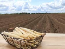 Asperges: meer oogst, minder export