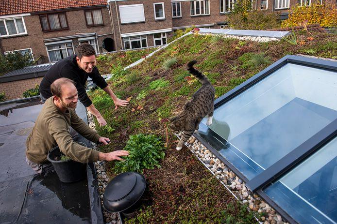 Mattijs van Dalen (links) heeft het groene dak van Joris Verhoeven (rechts) geplaatst. Ook de kat is er blij mee.