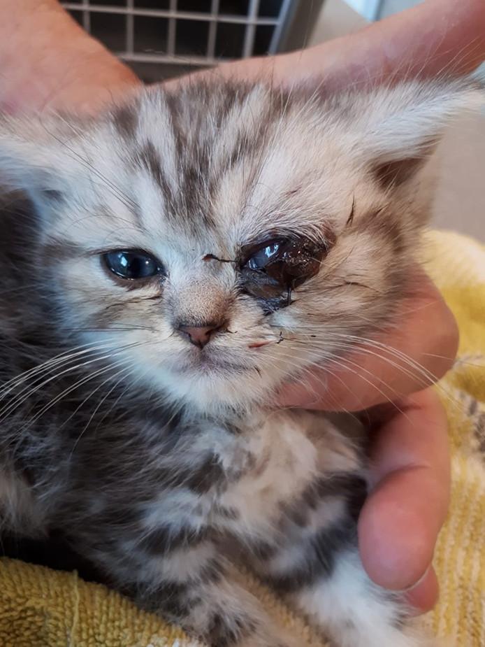 Het onfortuinlijke katje vóór zijn operatie.