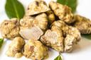 Witte truffels zijn een luxeproduct.