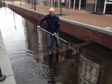 'Illegale' goudvissen moeten vanmiddag de Veenendaalse gracht uit