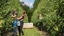4.700 buitenlandse perenplukkers op komst, en geen enkele garantie dat die allemaal getest zullen worden