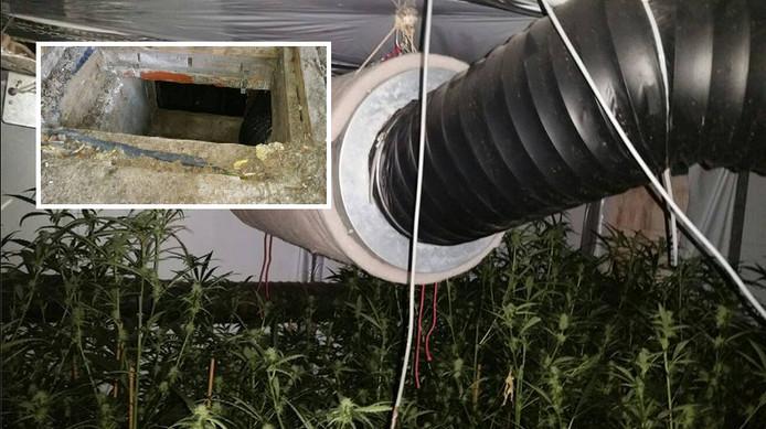 De wietplantage zat onder de grond verstopt. Inzet: ingang van de 'wietkelder'.