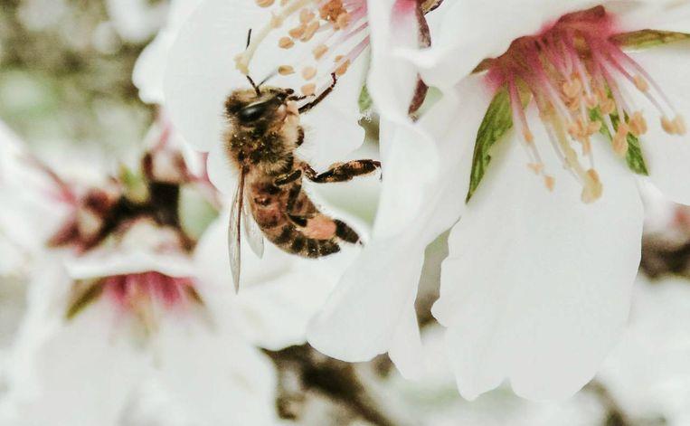 Een honingbij