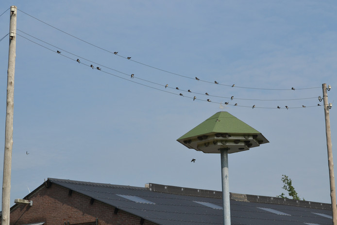 De huiszwaluwtil in Hooge Mierde moet veel zwaluwen trekken.