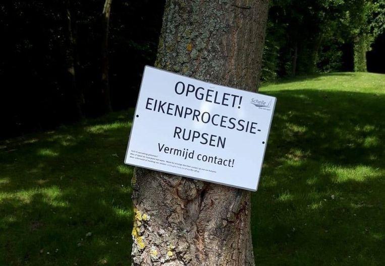 De gemeente waarschuwt voor de eikenprocessierups.