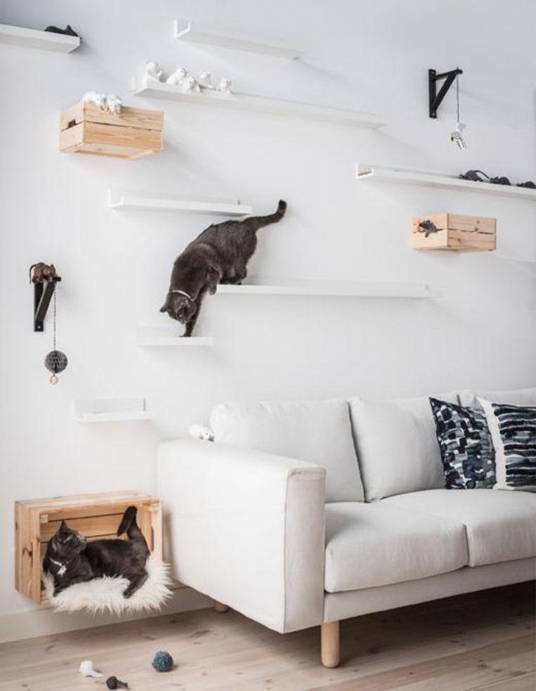 Plankjes Aan De Muur Voor Kat.Diy Kattenparadijs Creatief Met Schilderijplanken Van Ikea