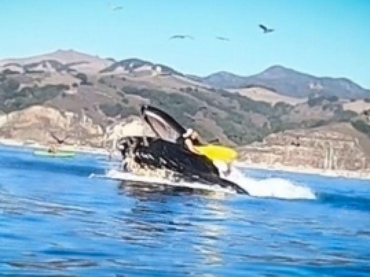 Deux kayakistes presque avalés par une baleine en Californie