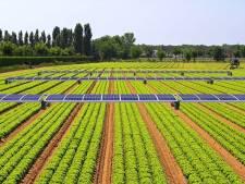 Winnen boeren straks de wereld met deze rijdende zonnevelden?