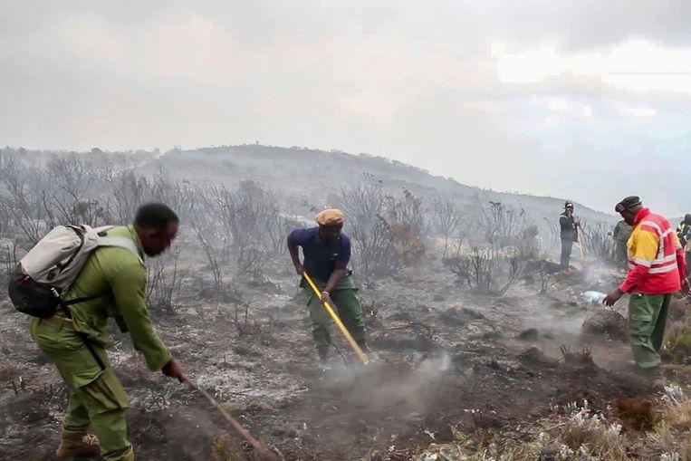 Rangers en vrijwilligers helpen bij het blussen van branden op de Kilimanjaro in Tanzania op maandag 12 oktober 2020. De Tanzaniaanse autoriteiten zeggen dat 500 vrijwilligers hebben geprobeerd een brand te blussen op de hoogste berg van Afrika.  Beeld AP