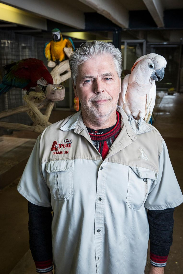 Jansen: 'Wij adviseren kooien van loodvrij staal. Duurder, maar beter voor de vogel' Beeld Dingena Mol