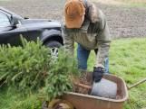 Adoptiekerstbomen gaan weer de grond in