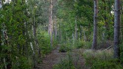 """Natuurgebied De Groene Delle wordt dan toch niet gekapt: """"De Vlaming heeft een duidelijke boodschap gestuurd"""""""
