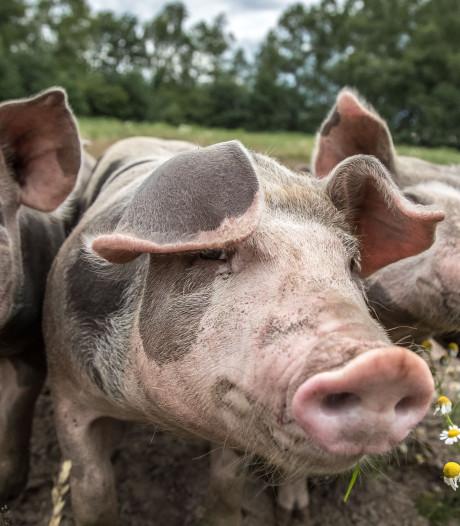 Varkenshouders steunen boerenprotest Arnhem