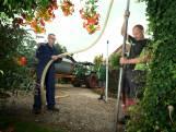 Razend populair: je eigen waterbron in de tuin