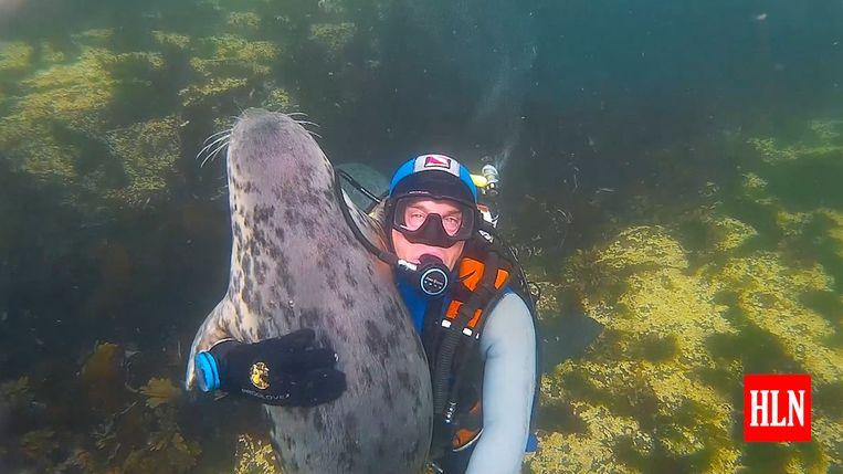 Deze speelse en sociale grijze zeehond knuffelt een duiker.