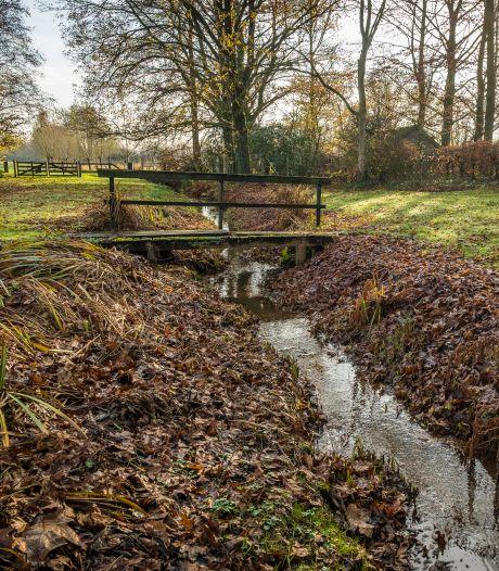Veluwe heeft dit jaar ook in herfst te maken met droogte: 'Extremen volgen elkaar op'