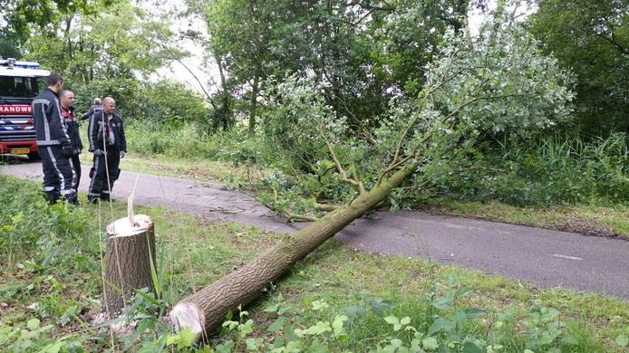 Een onbekende zaagde een boom om in Aarle-Rixtel