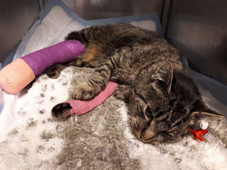 De kat kreeg de eerste zorgen toegediend bij de dierenarts.