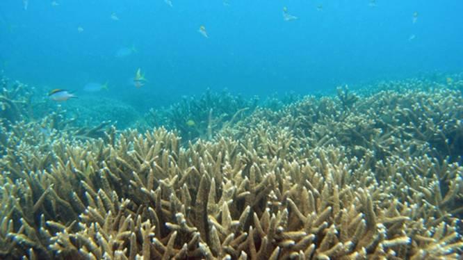 Great Barrier Reef wellicht op lijst bedreigd werelderfgoed