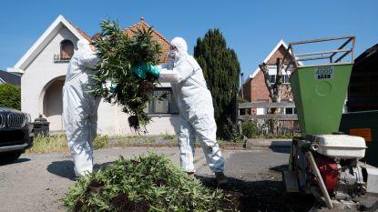 """Buurt reageert geschrokken op ontdekte cannabisplantage: """"Al vallen de puzzelstukjes nu wel in elkaar"""""""