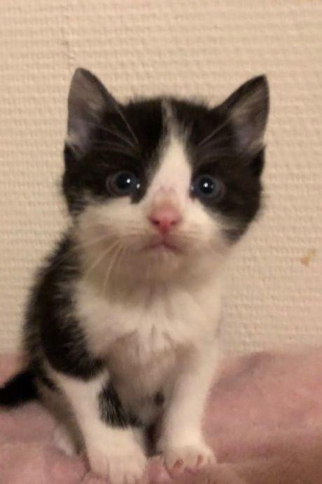 Zielig! Kitten van vijf weken oud gedumpt in plastic tas bij container