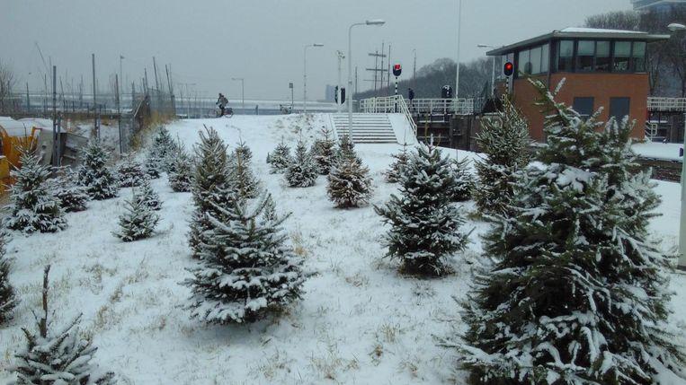 Het tijdelijk kerstbomenbos aan de Sixhavenweg Beeld Voortuin van Noord