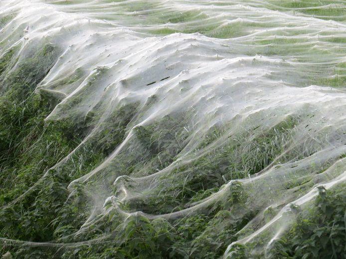 De spinnetjes klaarden hun klus in één nacht