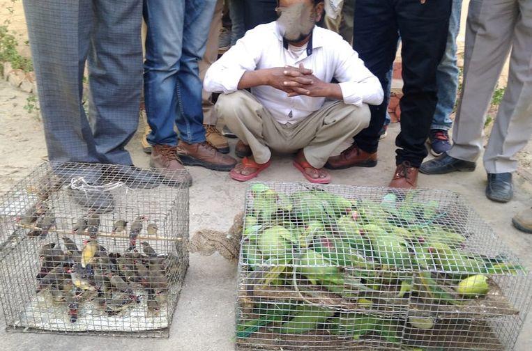 Vogels in beslag genomen in India.