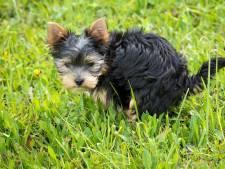 'Schaf hondenbelasting in Vlaardingen af en controleer strenger op overlast poep'