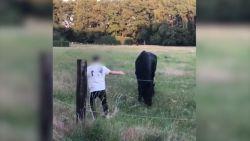 """Commotie nadat jongeren paarden treiteren en bekogelen: """"Ons hart breekt bij het zien van de beelden"""""""