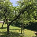 Een deel van de boomgaard van het paleis.