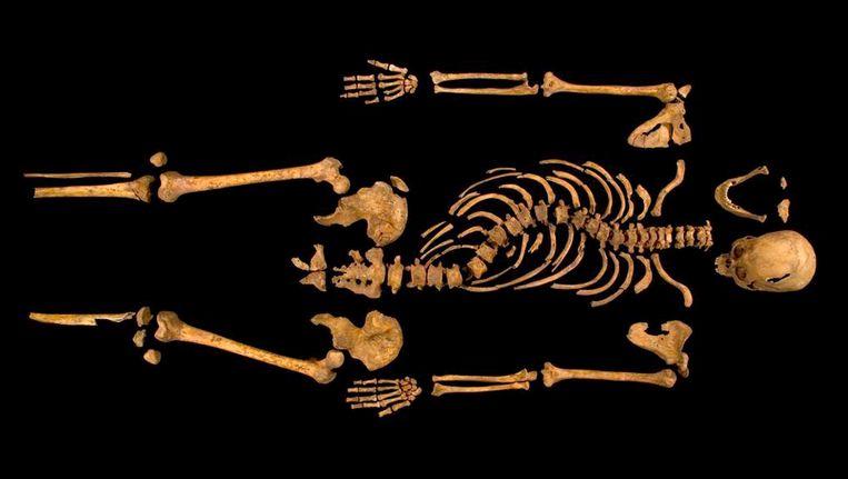 Het skelet dat vorig jaar september in Leicester werd gevonden. De vervormde ruggengraat wees ook naar Richard III, onderzoekers wisten namelijk al dat hij een bochel had. Beeld AP