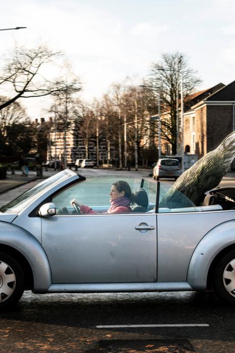 Het is een komen en gaan van mensen die met hun kerstboom slepen