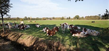 Oost Gelre: een op vijf boeren wil stoppen, één op drie wil groeien