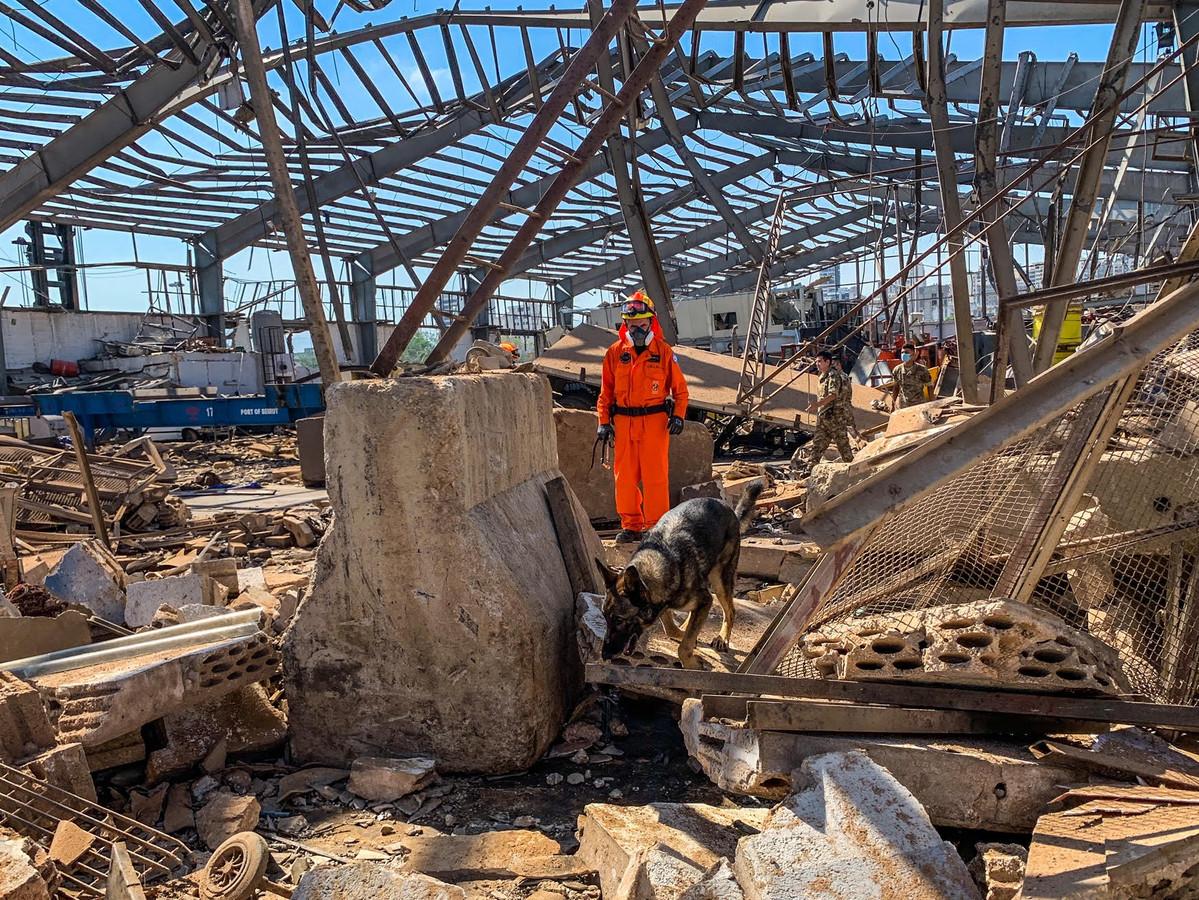 Een Nederlandse hond en diens begeleider speuren in het puin van Beiroet naar overlevenden.