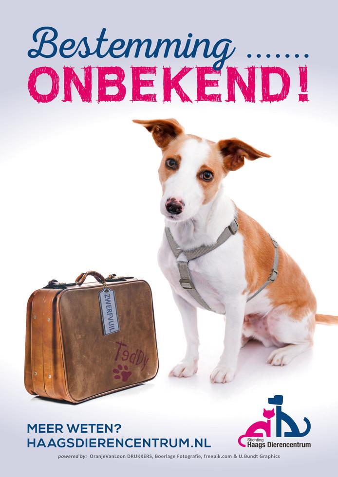 Poster van de campagne van het Haags Dierencentrum.
