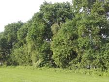 Hakbijl voor historische houtwal Putten