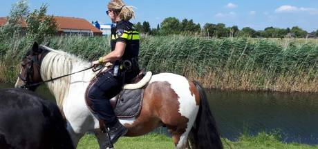 Meisje (16) gewond bij val van paard in Wijk en Aalburg