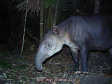 Burgers' Zoo breidt uit in Belize