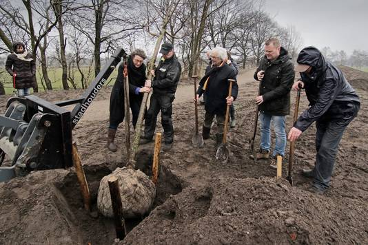 In 2016 plantte burgemeester Wobine Buijs een prunus in Geffen als compensatie van een handelsreis naar Vietnam.